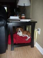 Bryson on a throw rug under the end table