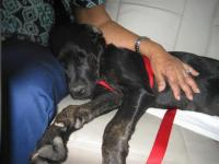 Samy going to her new home