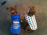 Camo and Sassy in their Gator coats